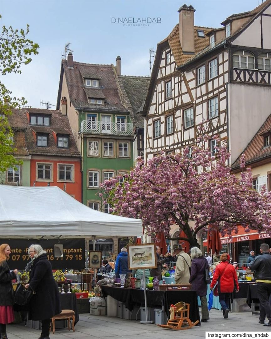 Quand les saisons se croisent, et puis restent ensemble.... (Strasbourg, France)