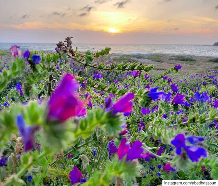 When spring & sunset colors melt together.................... (Tripoli, Lebanon)