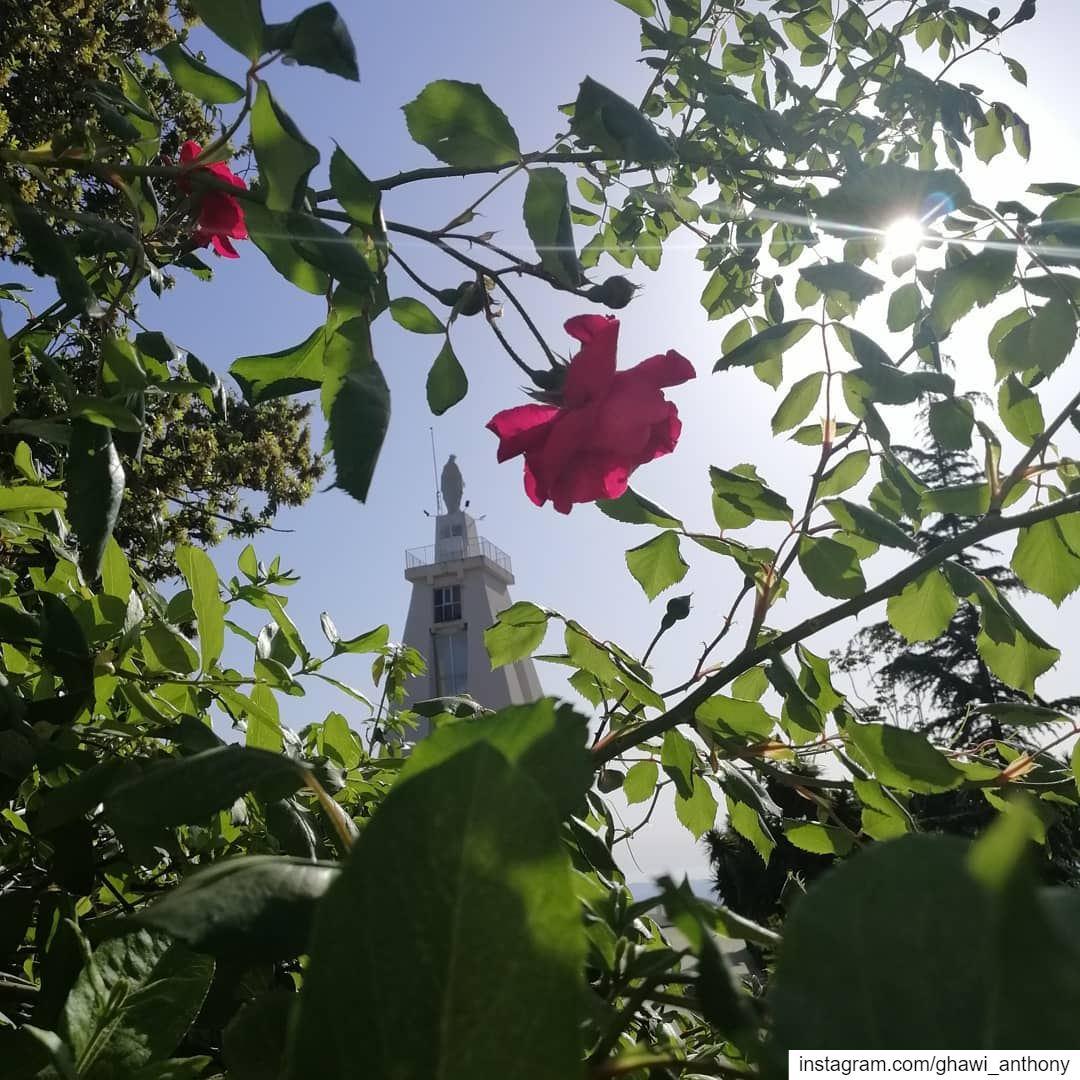 اليك الورد يا مريم... 🌺🌹🌿 livelovemiziara... (سيدة إم المراحم مزيارة)