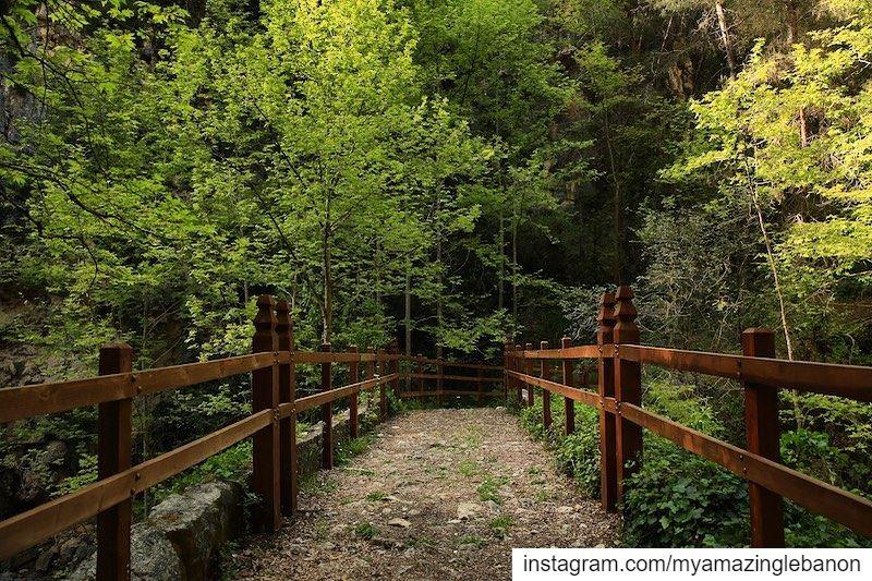 A nature lover's paradise. 🍃🦋🍃💚🍃🦋🍃 a7labaladbil3alam 🇱🇧.......