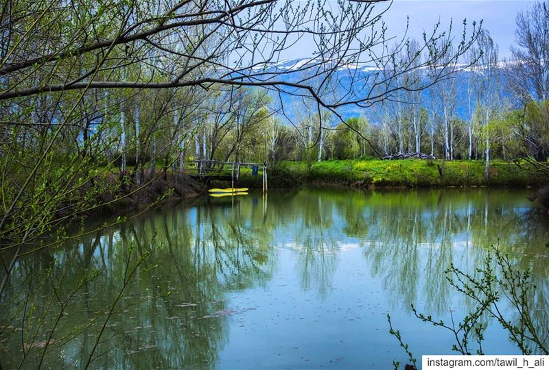 Frames 💚------ naturephotography nature instapic ig_shotz ... (Al-Mansoura - West Bekaa)