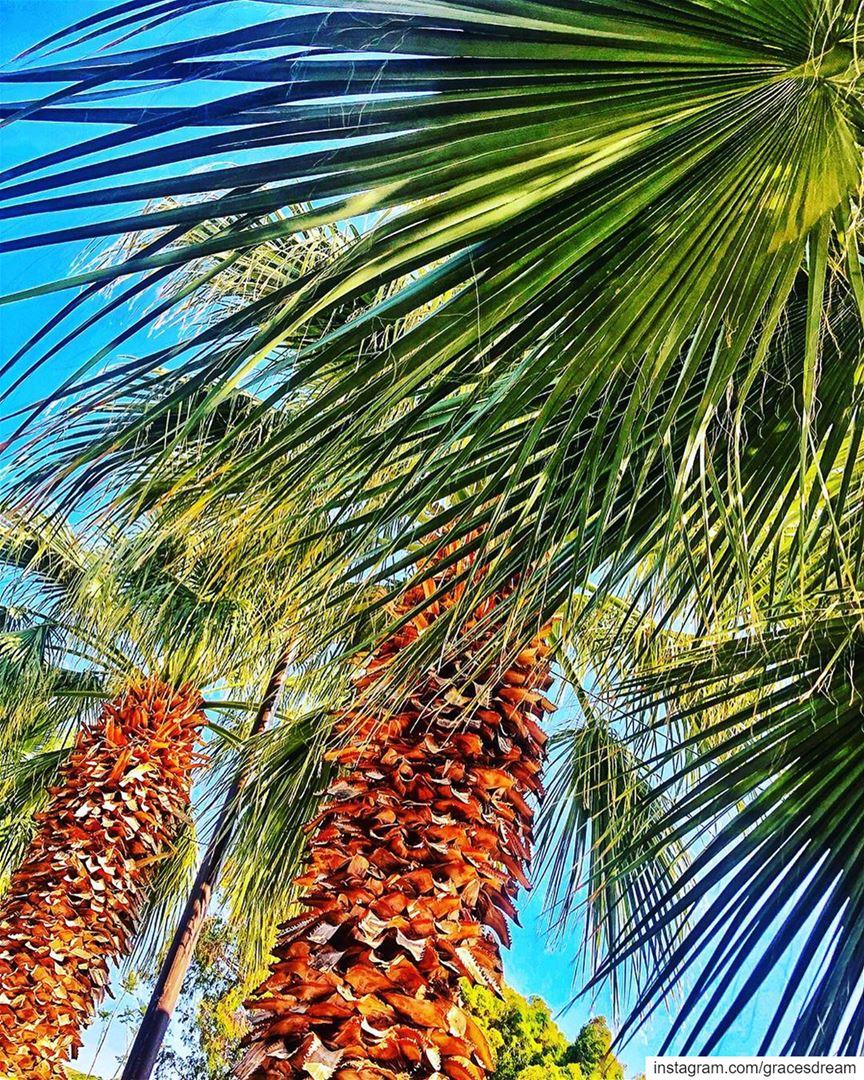 PalmTree 🌴 ....... Palm Tree BlackAndWhite ... (Batroûn)