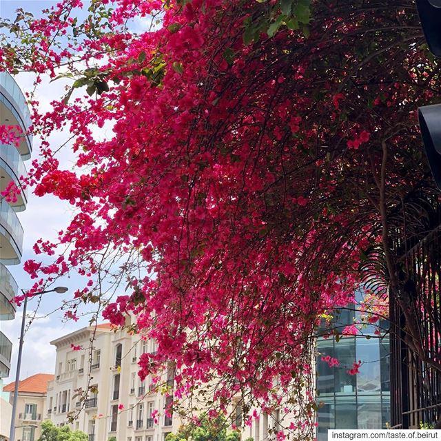 Beirut clics. beirut_lebanon livelovebeirut visitbeirut urbanphotos ... (Beirut, Lebanon)