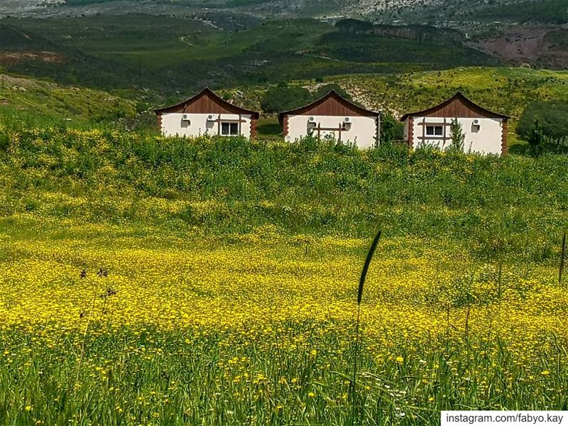 __________________________________▪️PHOTO Of THE DAY : 8 MAY 2019▪️LOCATI (El Qlaïaâ, Al Janub, Lebanon)