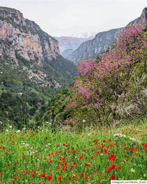 🇱🇧🇧🇷 A pimavera continua colorindo as paisagens do Líbano. Foto de @eli (Ouâdi Qannoûbîne, Liban-Nord, Lebanon)