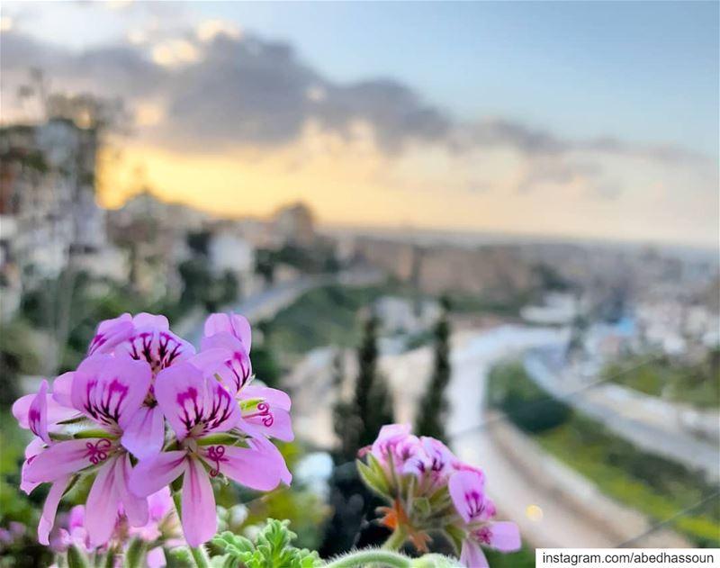 🌅🌸🌅............... Tripoli Lebanon sunset flowers ... (Tripoli, Lebanon)