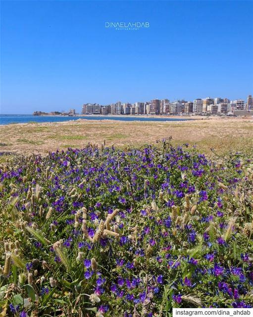 العودة إلى أرض المشرق_______________________________ lebanon ... (Tripoli, Lebanon)