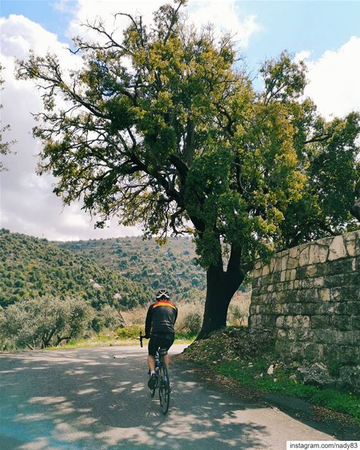 🚴‍♂️🌲... cycling instagood webstapick photooftheday ... (Mount Lebanon Governorate)