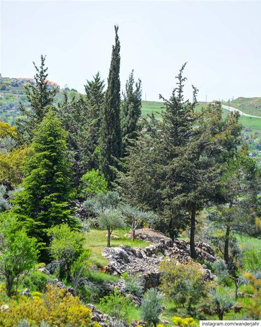 ياريتني سجرة على مطل الدنيي و جيرانها غير السما و غير المدى ما في حدا..� (Bekaa Valley)