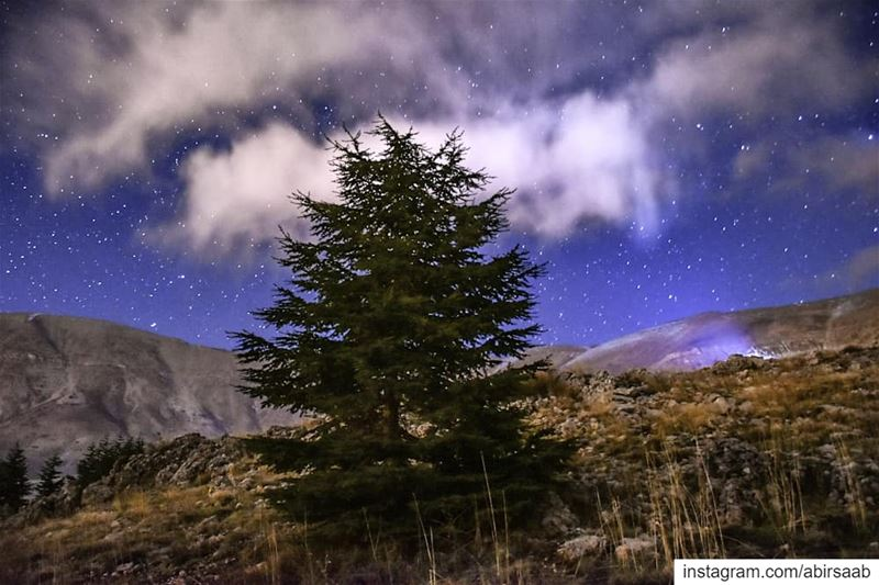Lonesome on a starry night.. Lebanon mountains cedar starry sky ...