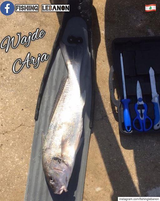 @wajde195 & @fishinglebanon - @lebanonfanlovers @lebanoninapicture @whatsup (Lebanon)