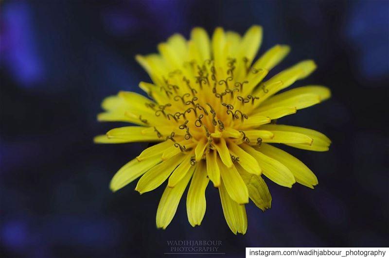 🔸🔸🔸🔸🔸 earthpix macromood macroclique Macro_Vision ...