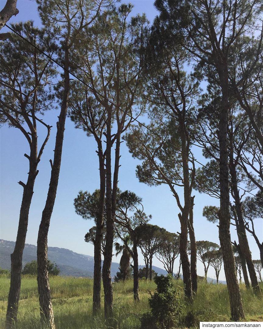 pinetrees nature outdoors microadventure explore neverstopexploring ... (Baabdâte, Mont-Liban, Lebanon)