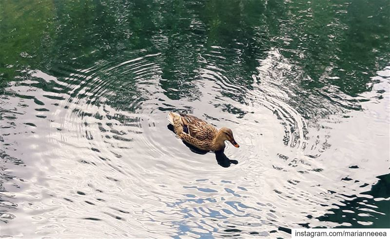 Be like a duck... 🦆 Create good vibes all around you... 💦 (Anjar)