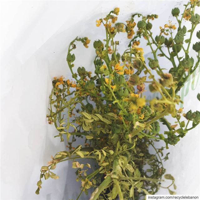 rueherb Native, ancient and protection offering from @riverroseapothecary.