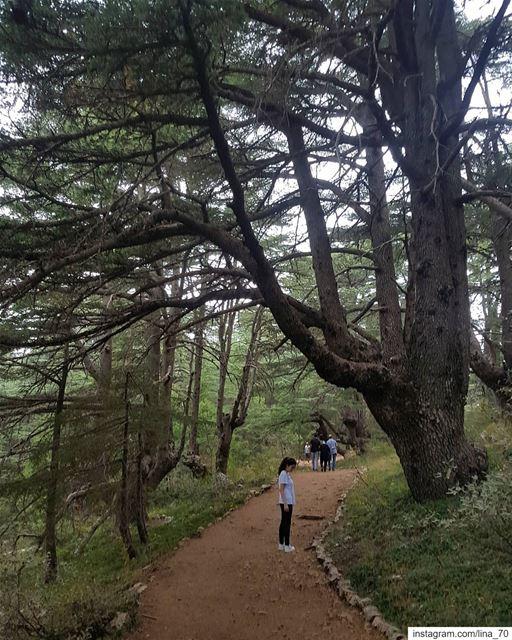 ليست حقيقةُ الإنسان بما يظهرهُ لك ، بل بما لايستطيع أن يظهرهُ .لذلك إذا أرد (Al Shouf Cedar Nature Reserve)