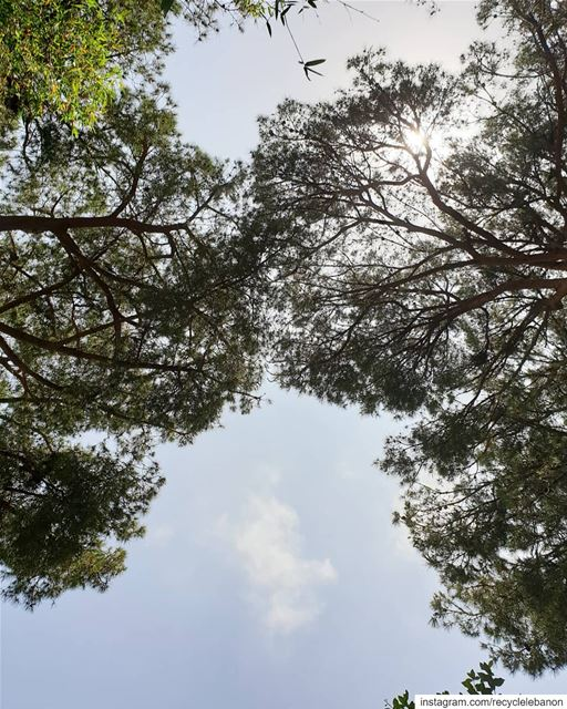Napping on the ground, I looked up and spotted the lungs of the world and... (Samen Eco Gardens)