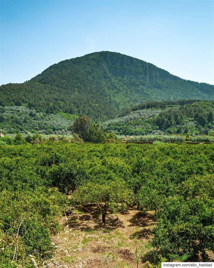 Good Morning 🌄 LiveLoveBisri Bisri LiveLoveLebanon Mountains ... (Bisri, Al Janub, Lebanon)