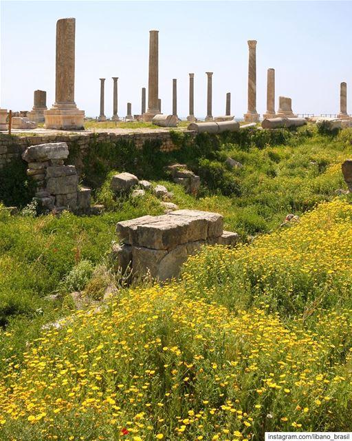 🇱🇧🇧🇷 Primavera colorindo a história e deixando ainda mais bonitos os... (Tyre, Lebanon)
