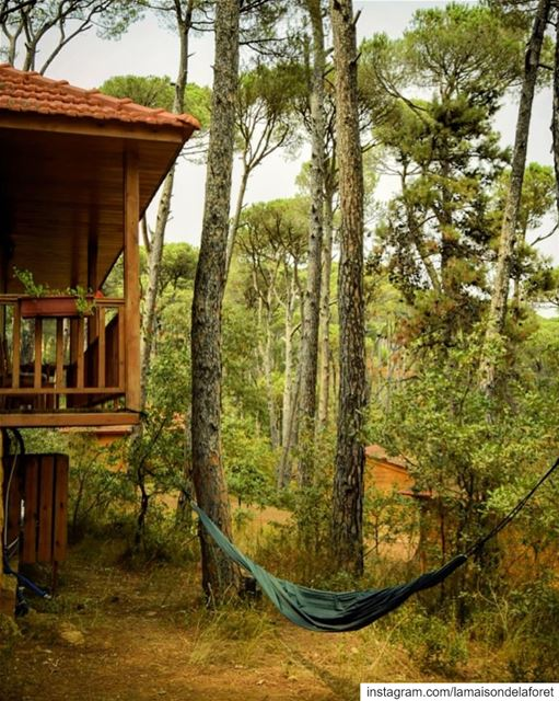 The hammock season is here again! ☀️ Now you can spend hours hanging in...