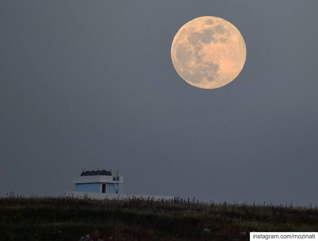 Only a true wolf will fall in love with the moon..😍 ====================== (Kfar Tibnît, Al Janub, Lebanon)