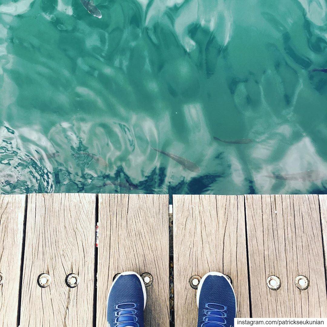 Hello 👋 Fish 🐟. beirut lebanon weekend sunset livelovelebanon ... (Zaitunay Bay)