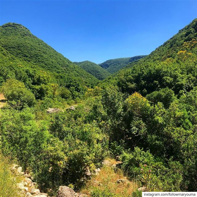 nature love lebanon picoftheday photooftheday photography ...