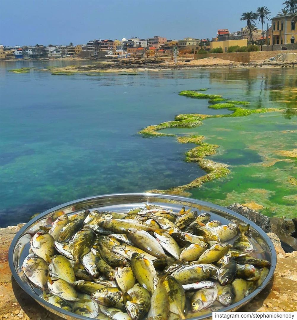 """Eat """"abou chawkeh"""" everyday and keep the doctor away 😁😋🐟🐠 summer ..."""