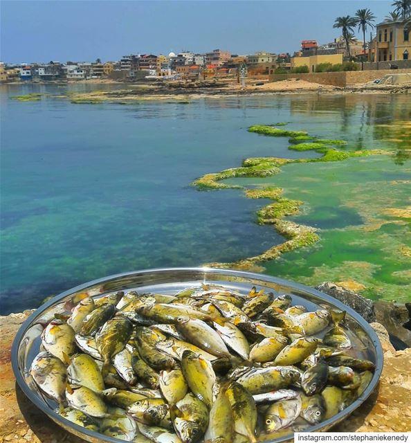 "Eat ""abou chawkeh"" everyday and keep the doctor away 😁😋🐟🐠 summer ..."