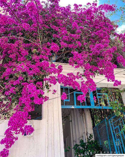 F • R • E • S • H • 🇱🇧..... globalcapture main_vision big_shotz ... (Beirut, Lebanon)