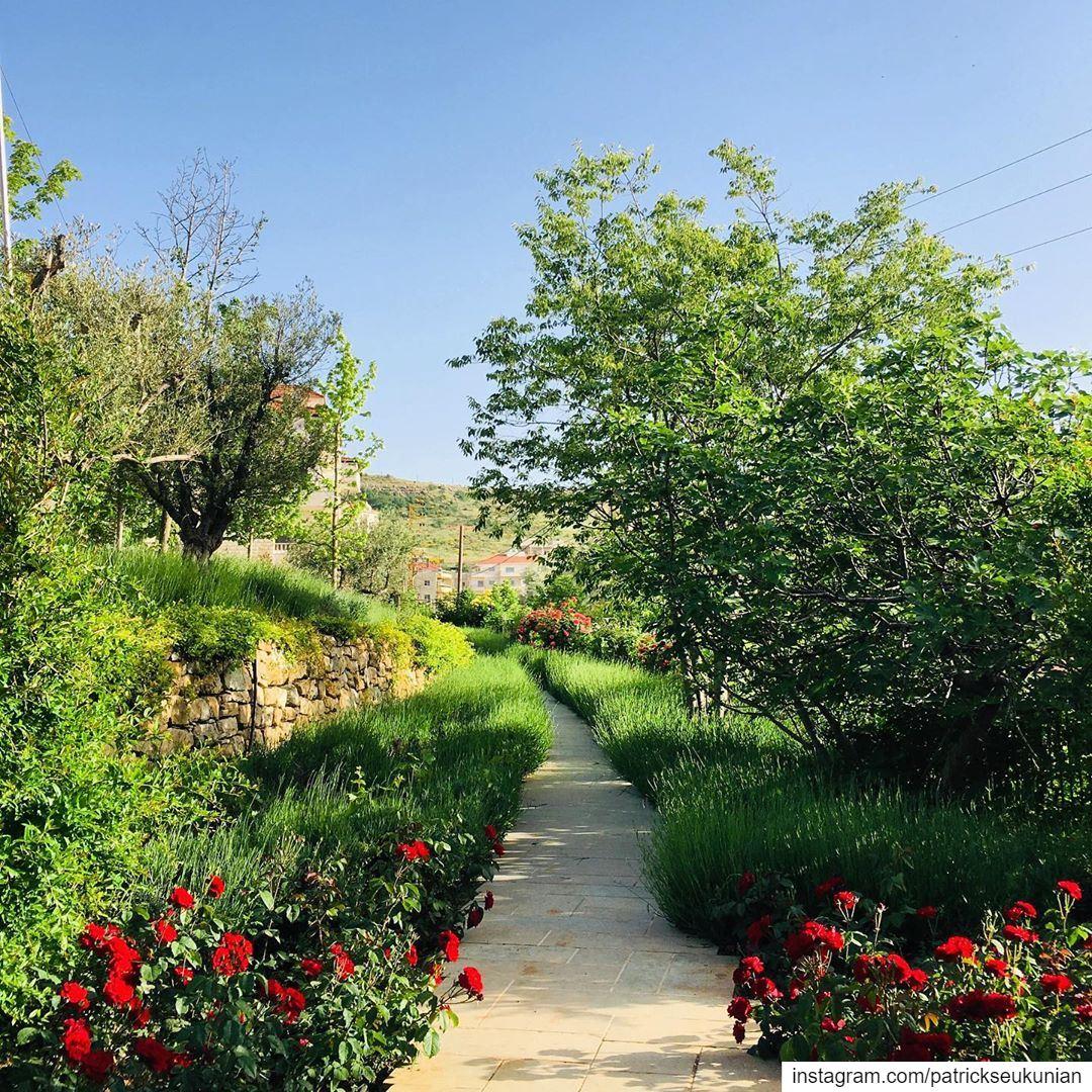 Have A Green Monday. cedar man nature mountain lebanon beirut ... (Bhamdoûn, Mont-Liban, Lebanon)