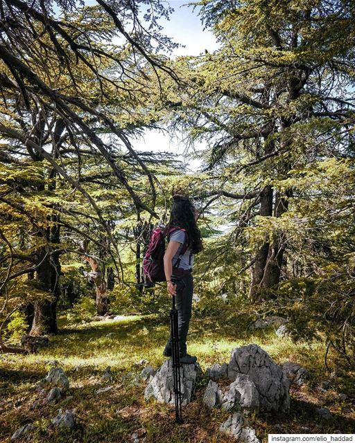 📸 By: @oneplus Oneplus Lebanon 🇱🇧 shotononeplus Barouk Cedar ...