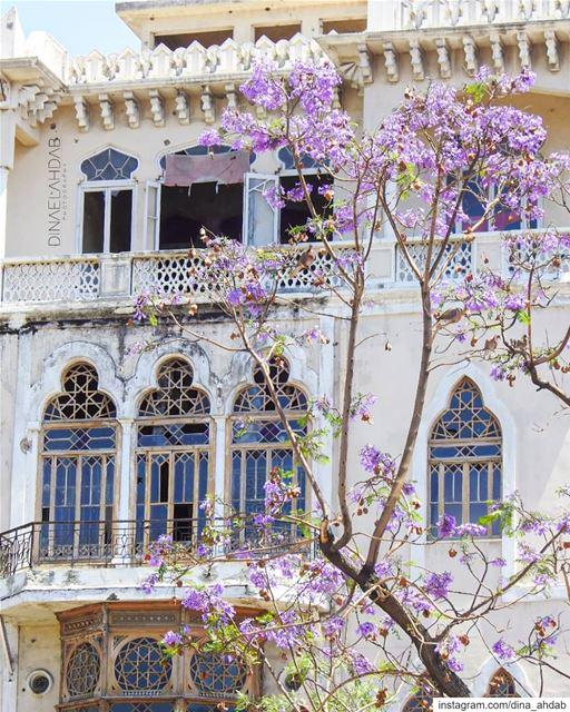 🌸___________________ lebanon lebanon_hdr sunlight buildings ... (Tripoli, Lebanon)