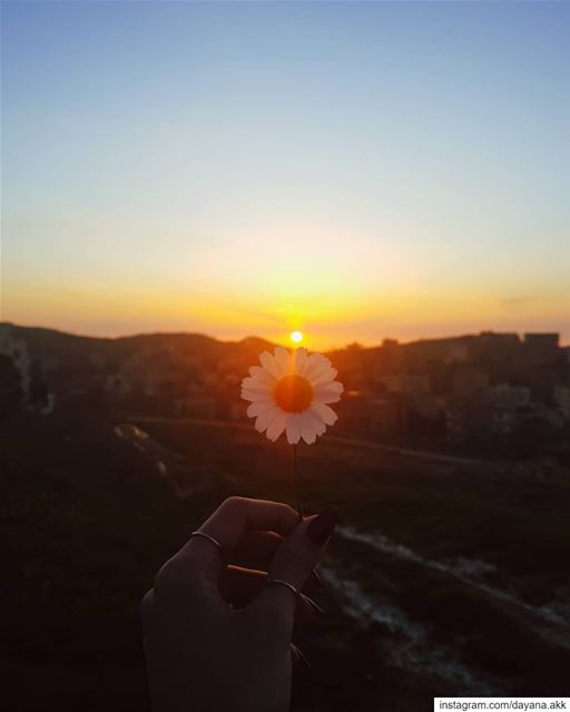 """When the suns align with a touch they kindle"" -D... sunset flower ... (Rwayset Sawfar)"