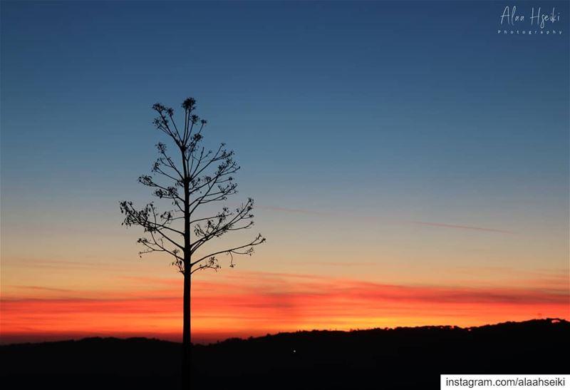 Ravis-toi des petites choses ❤️... Hseiki Lebanon beirut nature ... (Kfarhim)
