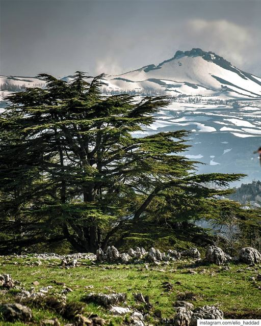 Good Morning 🌄 🔝 LiveLoveTannourine  Tannourine  LiveLoveLebanon ... (Arz Tannoûrîne)