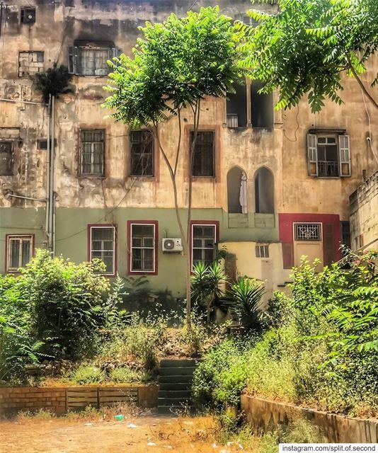 Morning 🍀💚... beirut lebanon lebanontimes livelovebeirut travel ...