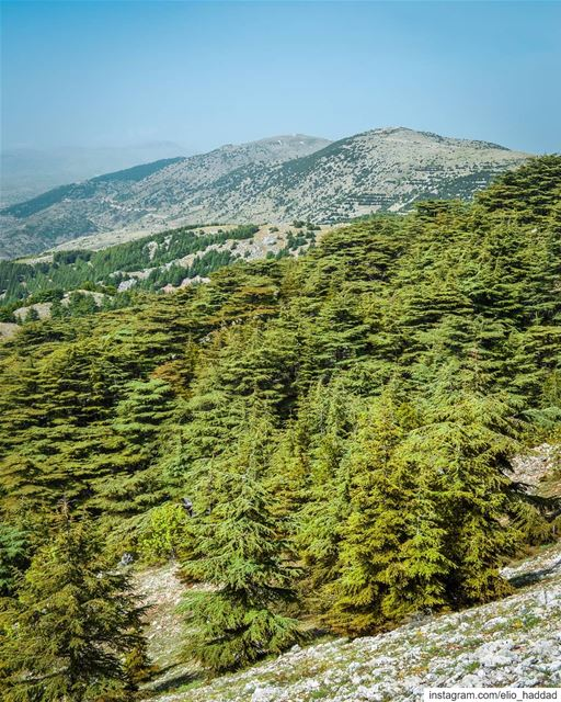 Good Morning 🌄 Swipe 👆 LiveLoveBarouk  Barouk  LiveLoveLebanon ... (Arz el Bâroûk)