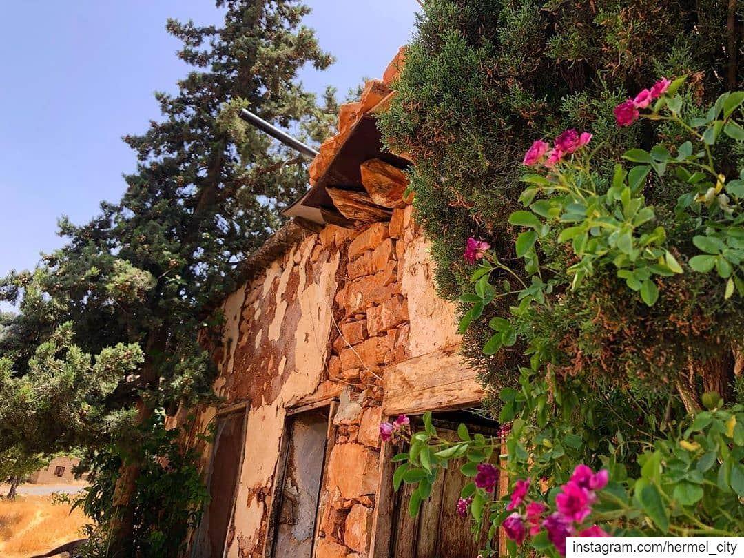 يا بيتي يا بويتاتي ... فيك خلقت وفيك ربيت By @zeinabtueni Hermel Bekaa ... (El Hermel, Béqaa, Lebanon)