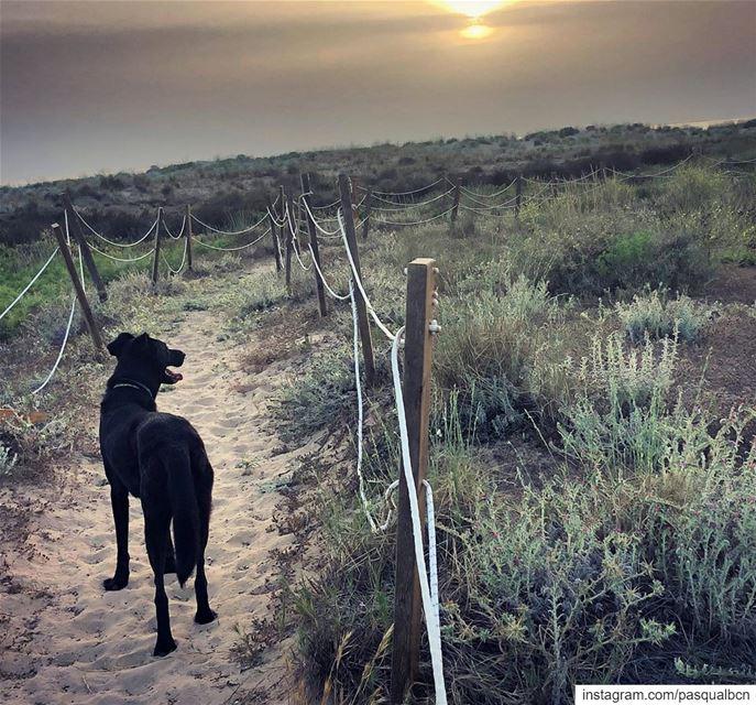 Lumumba's cheesie sunset natural nature naturephotography dog eid ... (Tyre, Lebanon)