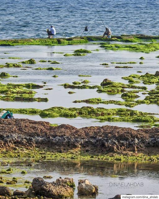 هل يبكي البحر لأن سمكة تمردت عليه؟ كيف تسنى لها الهروب وليس خارج البحر من ح (Tripoli, Lebanon)