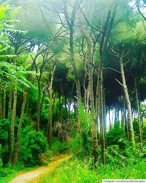 Take the power to walk in the forest and be a part of nature. 🌲🌳🍃...