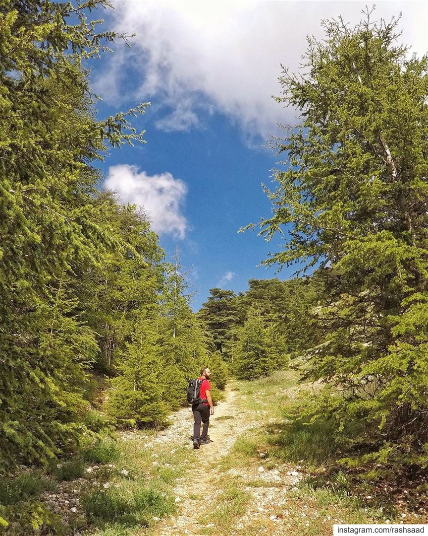 Nature-ally 🌲.... hiking lebanon mountains chouf cedars spring ... (Lebanon)