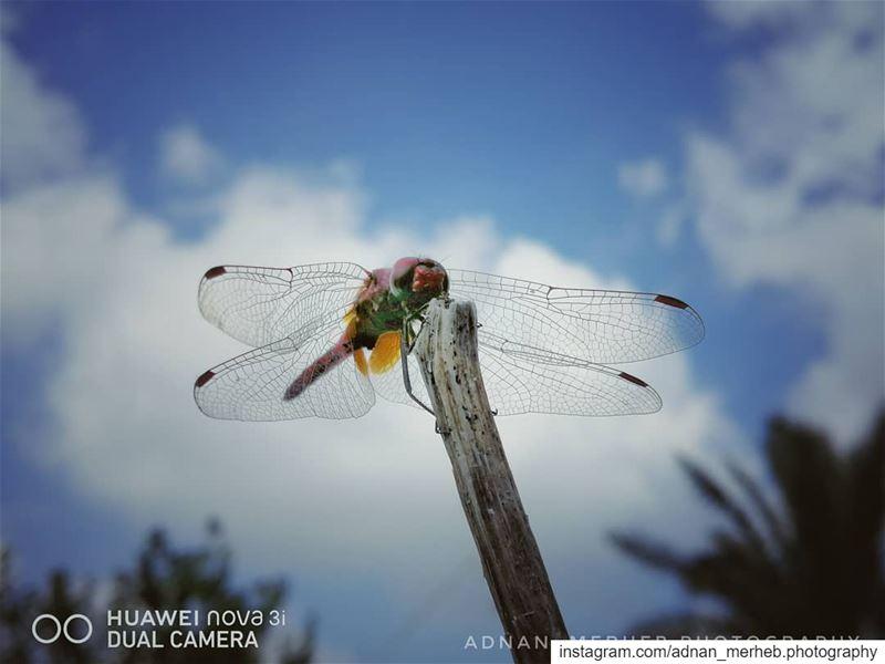 Huawei nova 3i ❤️ macro nature macrophotography photography ... (El Bireh , Akkar)