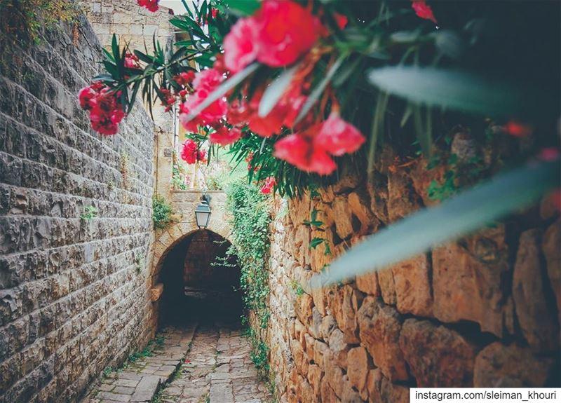 ℕ𝕖𝕧𝕖𝕣 𝕤𝕥𝕠𝕡 𝕨𝕒𝕟𝕕𝕖𝕣𝕚𝕟𝕘 𝕚𝕟𝕥𝕠 𝕨𝕠𝕟𝕕𝕖𝕣 🌸 •••••••••••• (Deïr El Qamar, Mont-Liban, Lebanon)
