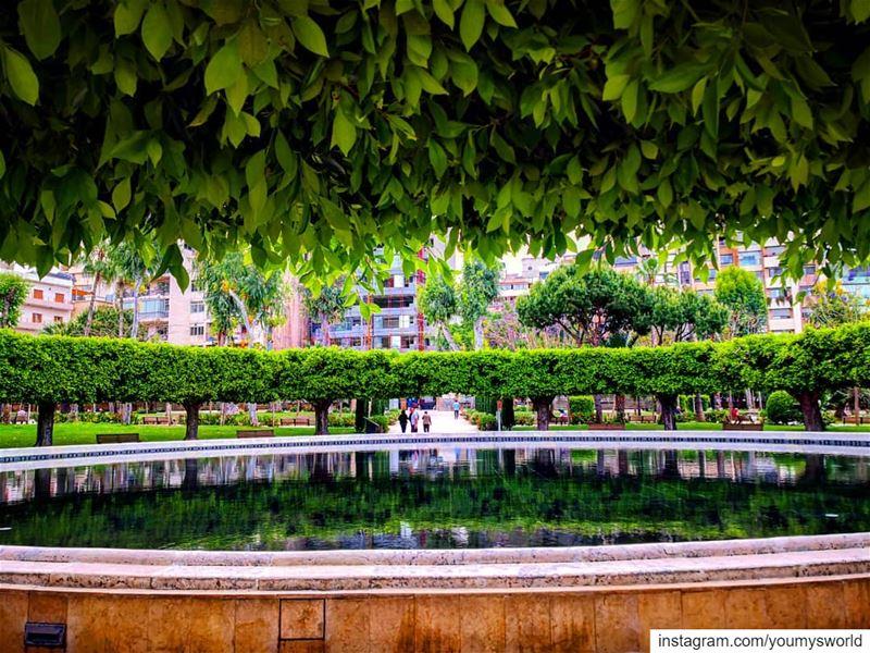 ☘️For the love of green ☘️⛲ (Beirut, Lebanon)