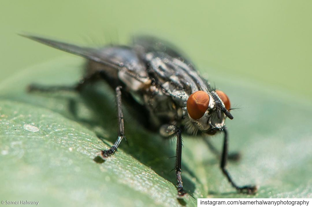 The Fly!...from the macro world the insideworld of the fly insect ...