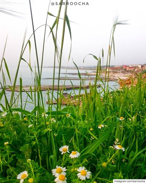 Every flower is a soul blossoming in nature. takenbyme  nakoura ... (Naqoura)