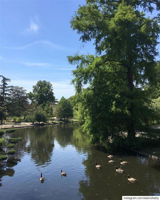 كواك كواك ...______________________________________ LibanaisÀBordeaux ... (Jardin public de Bordeaux)
