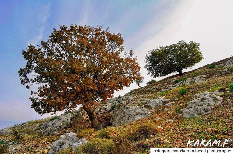 ansar lebanon 🇱🇧 southlebanon nature colorful colors tree ... (Ansar, Lebanon)